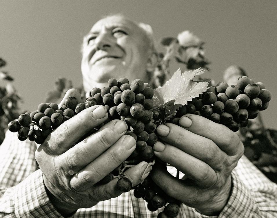 Degustazioni vini Toscani negli Usa | Manifestazioni New York e Chicago
