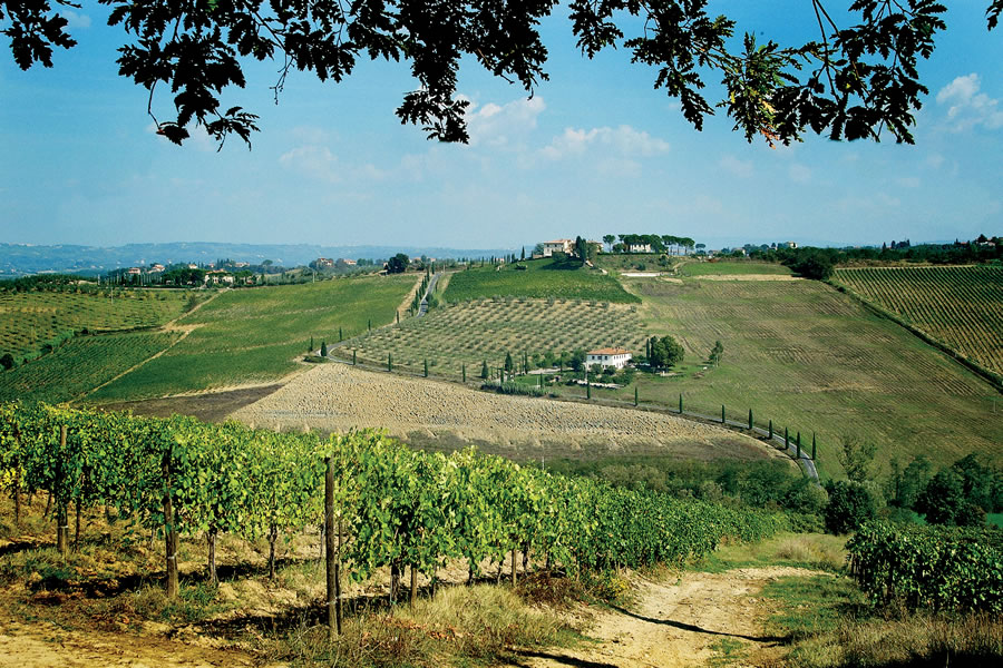 olio extra vergine di oliva biologico Toscano