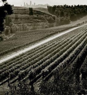 vineyard poderi arcangelo san gimignano